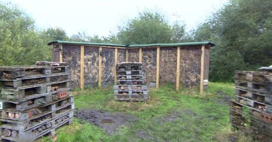 World's largest bug hotel