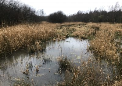 Amberswood, Wigan – Wetland Enhancement