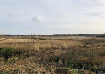 Risley Moss, Warrington – Scrub Control